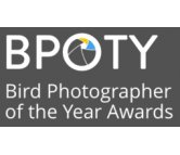 Bird Photographer of the Year - an avian celebration!